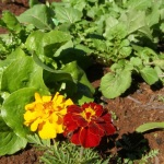 Save Money By Growing Your Own Vegetables